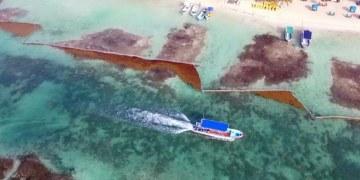 Arribazón de sargazo disminuye en playas de Quintana Roo 39