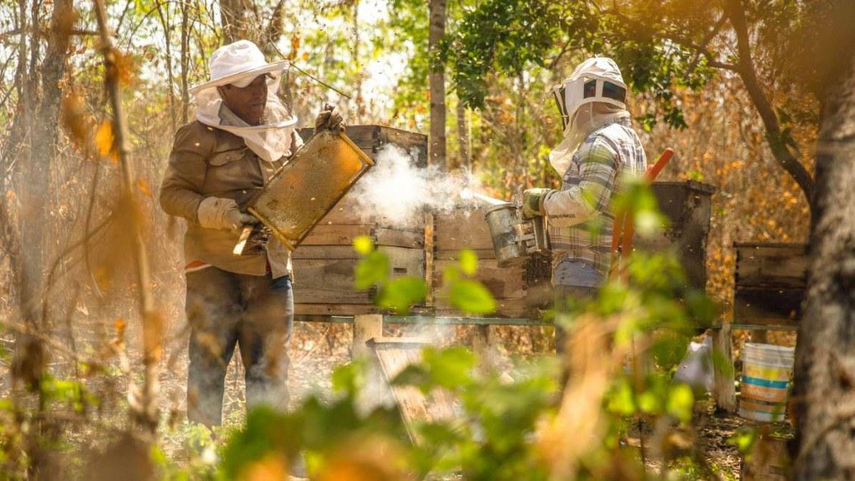 México, octavo lugar mundial en producción de miel; prevén aumento del 22.4% 2