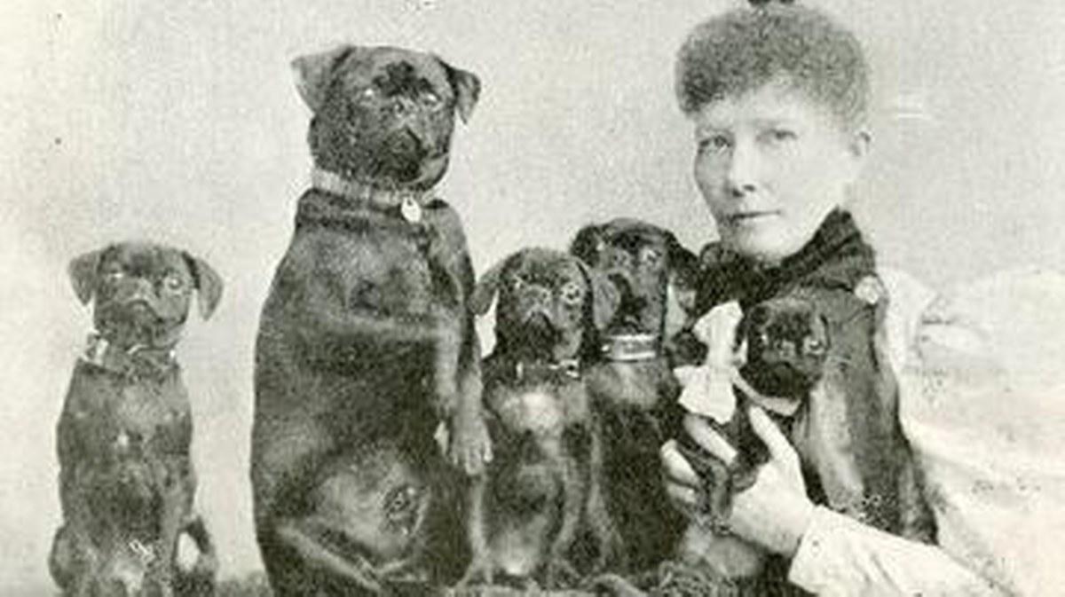 El ladrón de valiosos perros falderos, una práctica lucrativa desde el siglo XVIII 2