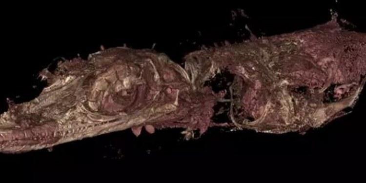 Fósil que se había tomado como pájaro resulta en realidad un lagarto 1