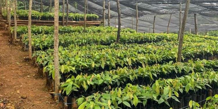 Beneficiarios de Sembrando Vida exigen entrega del fertilizantes que está en bodega 1