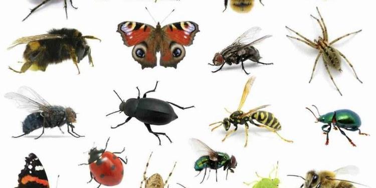 """""""Estamos en el apocalipsis de los insectos""""; hay disminuciones masivas, alertan biólogos 1"""