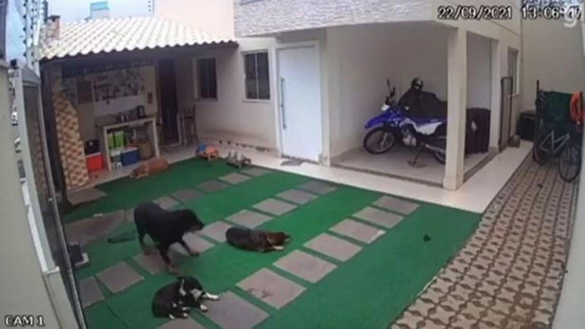 Abejas asesinas atacan a cuatro perritos que dormían; por las picaduras mueren dos 1