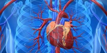 El Covid-19 también puede dañar el corazón y el sistema circulatorio 6