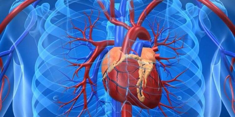 El Covid-19 también puede dañar el corazón y el sistema circulatorio 1