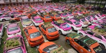 """Choferes de taxis crearon """"minijardines"""" en los techos de sus vehículos como acto de protesta 12"""