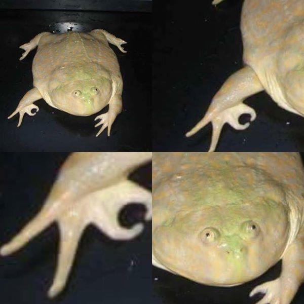 peter gazer