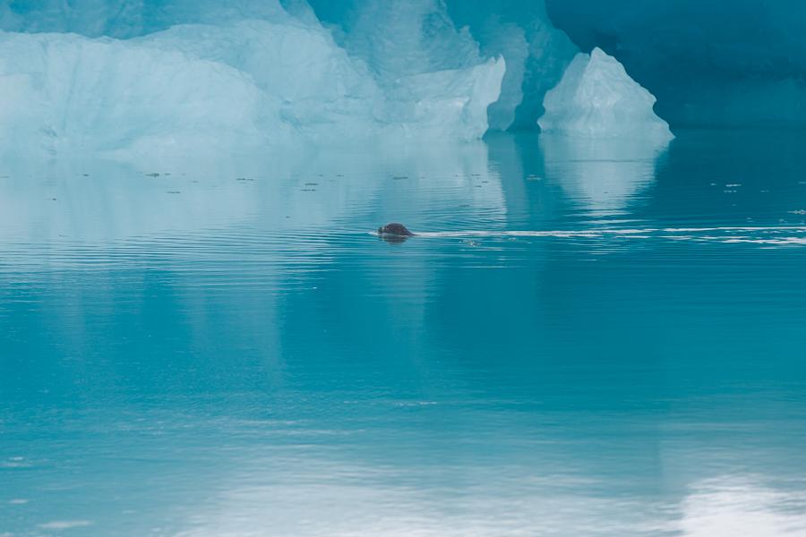 glacierlagoonBLOG-112 Iceland's Glacier Lagoon Our Life Travel