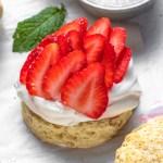 Strawberry Shortcake Closeup