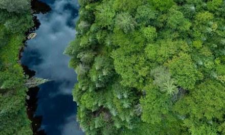 """NESTLÉ ANNOUNCES NEW """"FOREST POSITIVE"""" STRATEGY"""