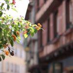 Oh du schönes Elsass - Colmar