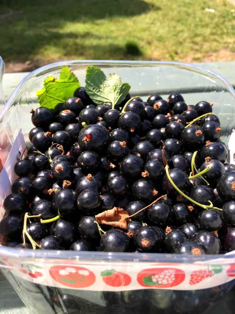 Blackcurrants in a punnet