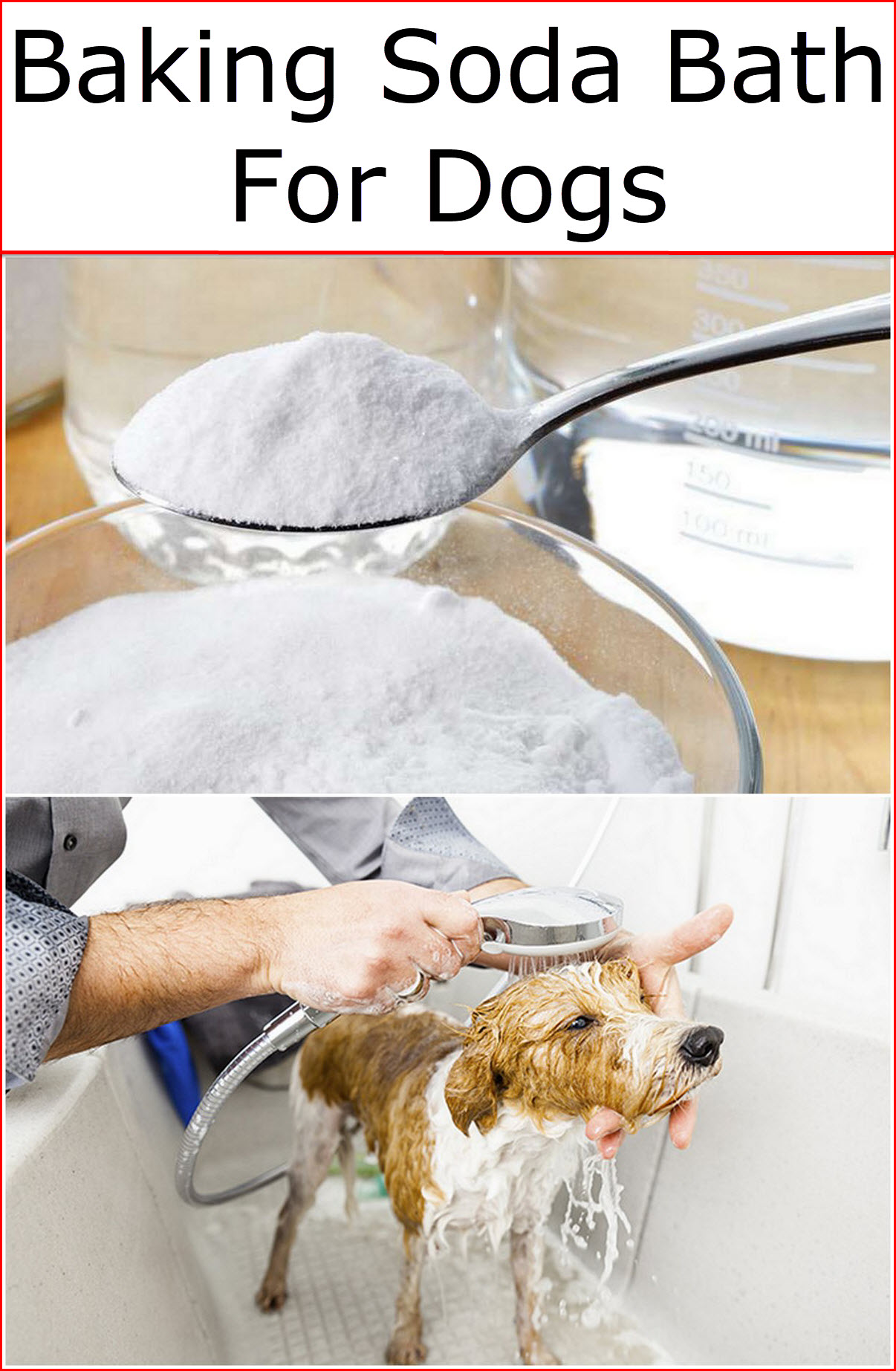 Baking Soda Bath For Dogs   Baking Soda Uses and DIY Home ...
