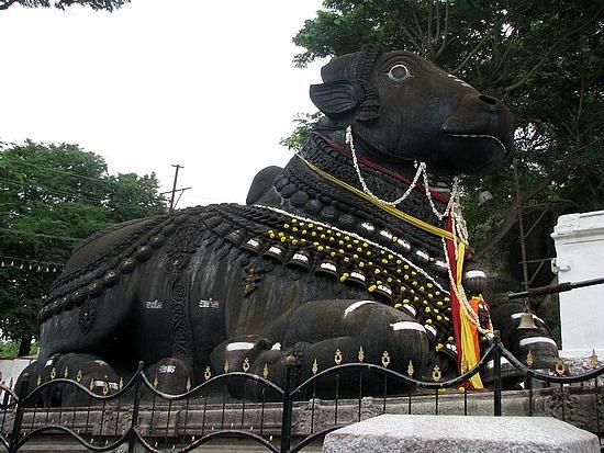 1.1306697033.nandi-bull-on-the-mysore-hills
