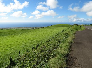 More green on this side of Kohala Mountain Rd