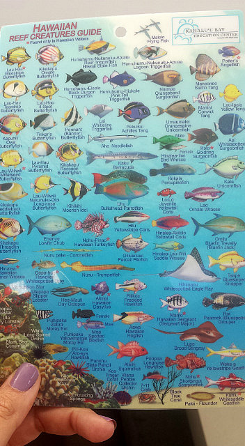 12.1419672323.hawaii-reef-creatures-guide