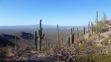18.1492875416.saguaro-stand