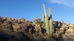 18.1492963147.saguaro-buddies