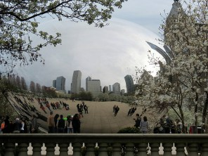 The Bean framed by spring blossoms