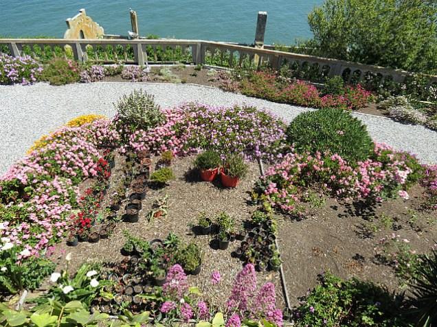 A nice garden in Alcatraz - so unexpected!
