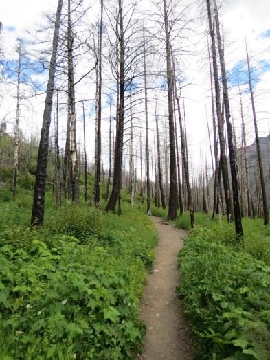 Trail to Baring Falls