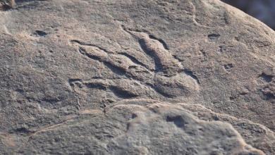 صورة طفلة تكشف بصمة ديناصور تعود لـ 220 مليون عام