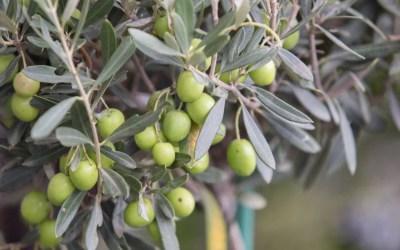 Nitrato de potasio: qué es y para qué sirve