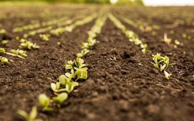 ¿Qué es la agricultura de conservación?