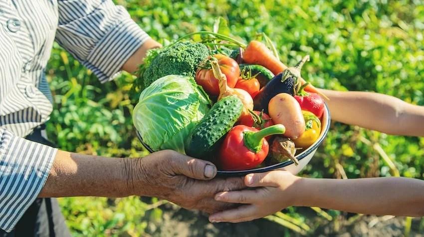 ▷ Qué es la agricultura de subsistencia y cuál fue su origen | Balam