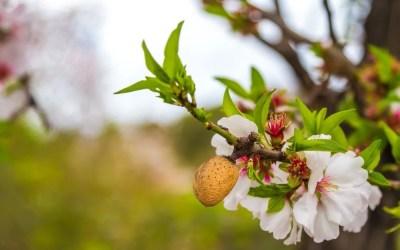 Fertilizantes nitrogenados para almendros