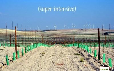El auge de las plantaciones de olivar