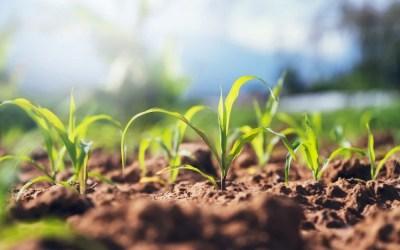Cultivos de cobertura: qué son y en qué afectan a nuestro terreno