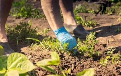 Qué es herbicida selectivo y cuáles son sus ventajas