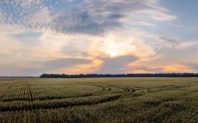 ¿Cuáles son los cereales de invierno? Descubre sus características