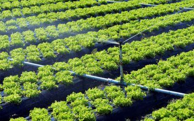 Tipos de riego en la agricultura y la importancia de su diseño