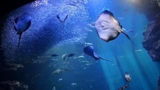 京都水族館の早得を検証。早期割引はやるべきか。