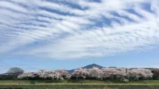 桜の季節に感じること。あと何回?