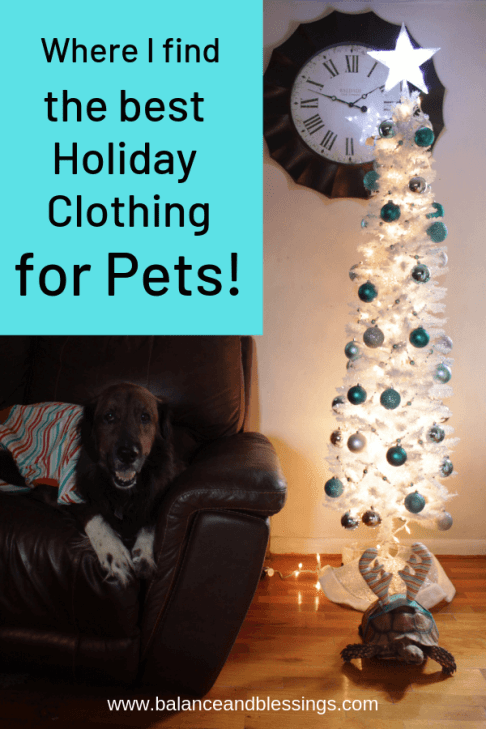 holiday clothing for pets for any season