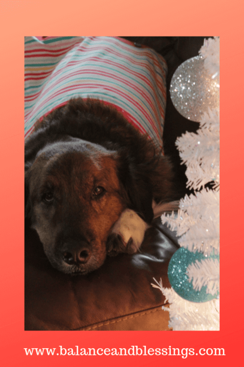 holiday clothing for pets and dogs