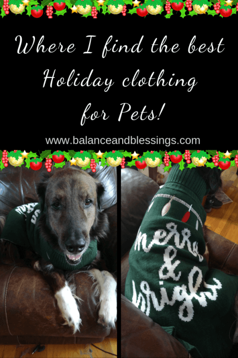 the best holiday clothing for pets ugly sweaters for dogs