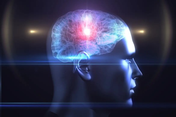 A computer graphic shows a human head and brain. The brain is colored brightly. Scientific studies help show how to increase willpower in human being.
