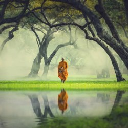 An image shows a Buddhist monk deep in a forest standing next to a river where his own reflection can be seen. This image represents the Division of Wisdom in the Buddha's Noble Eightfold Path.