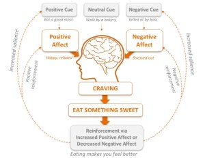 An image shows a diagram of a psychological theory, which is used in Mindfulness-Based Stress Reduction (MBSR), known as the habit loop.