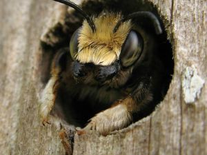 natural-remedies-to-treat-bee-stings