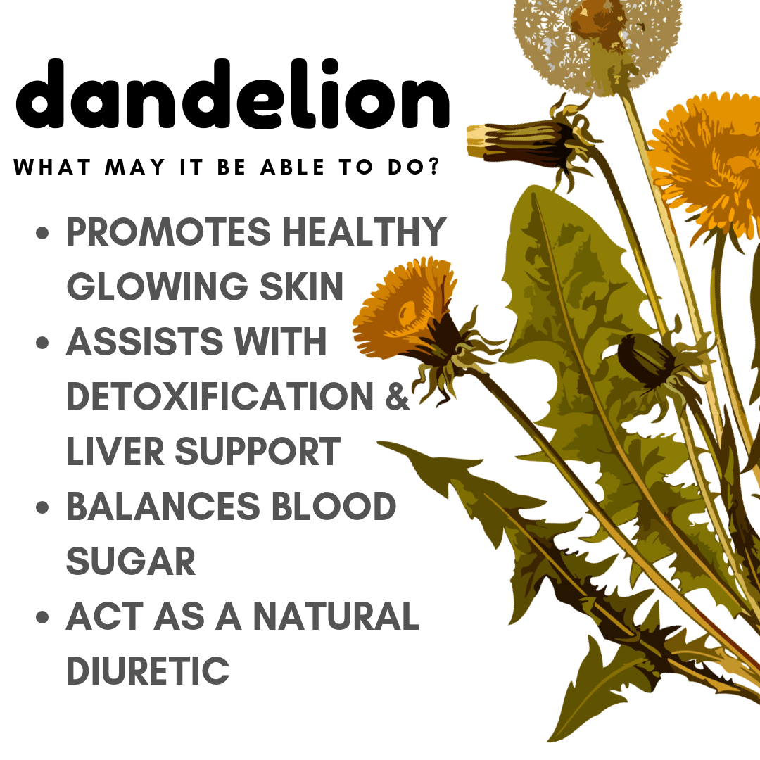 dandelion benefits and uses - balanced babe