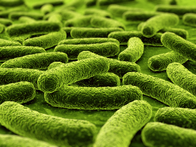 Bacteria / Fungal Toxins Cleanse