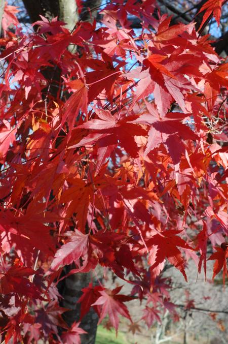 fall_4.jpg