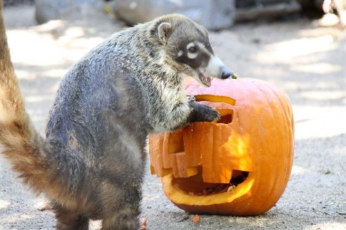 Get Festive With The Animals at Halloween Zoo-tacular
