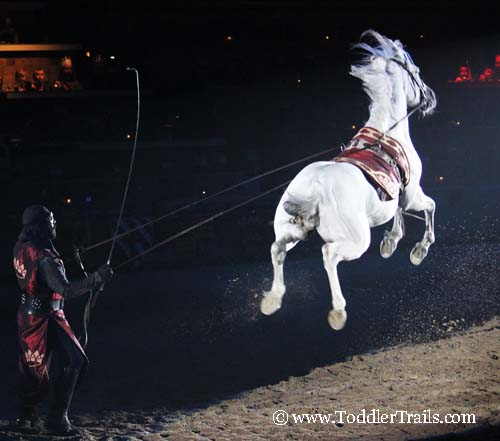 Medieval Times Andalusian Jump