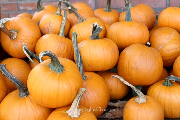 Orange County Pumpkin Patches Pumpkins Galore